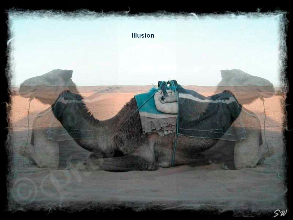 Die Sahara in der Abendsonne SW