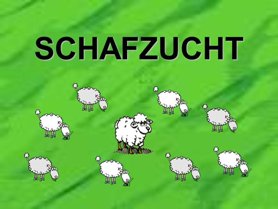 E in Mann will sich eine Schafherde aufbauen und kauft dazu 8 Schafe und einen Schafbock.