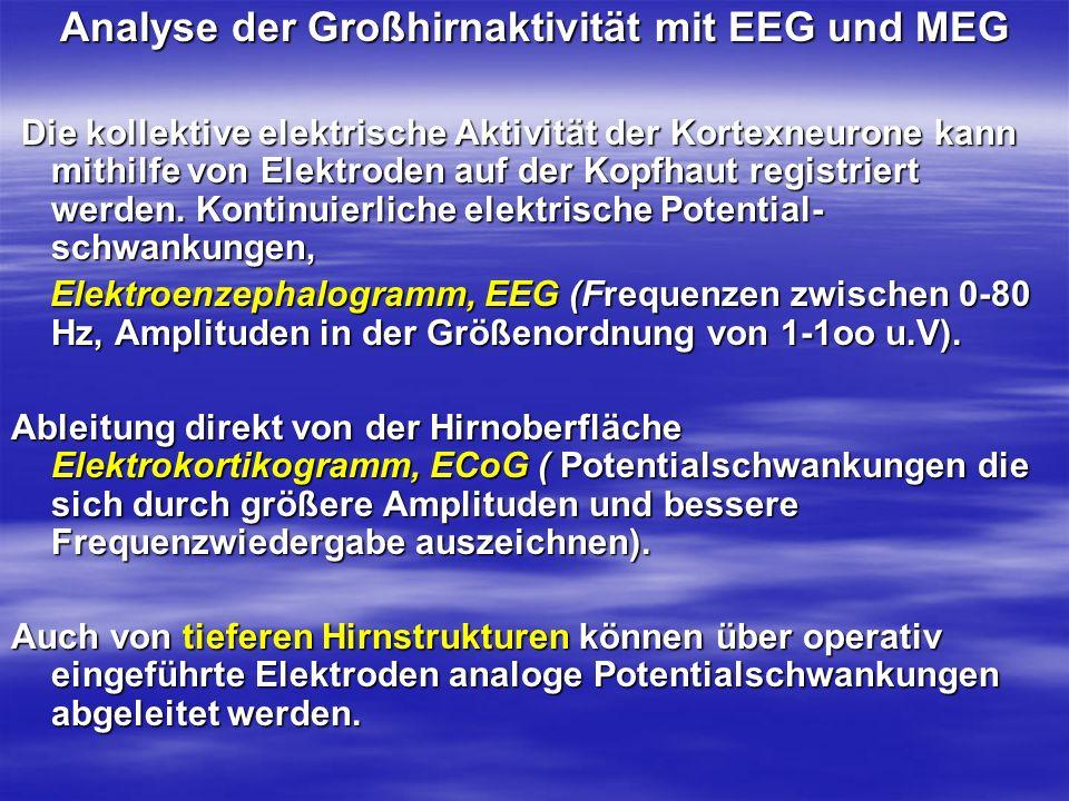 Analyse der Großhirnaktivität mit EEG und MEG Die kollektive elektrische Aktivität der Kortexneurone kann mithilfe von Elektroden auf der Kopfhaut reg