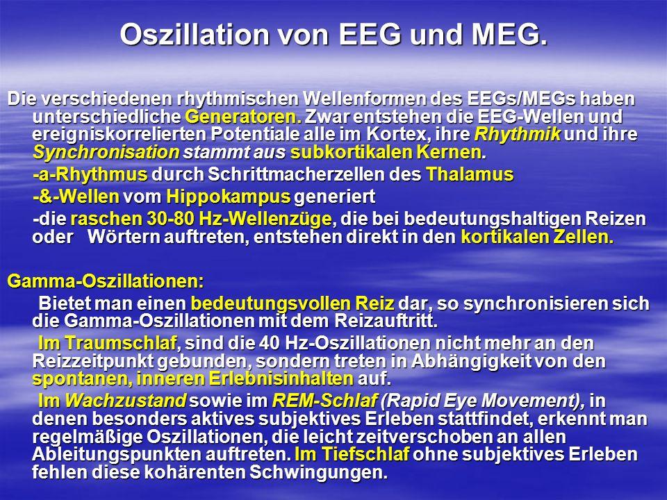 Oszillation von EEG und MEG. Die verschiedenen rhythmischen Wellenformen des EEGs/MEGs haben unterschiedliche Generatoren. Zwar entstehen die EEG-Well