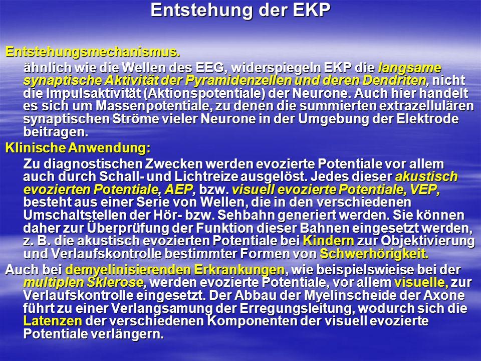 Entstehung der EKP Entstehungsmechanismus. ähnlich wie die Wellen des EEG, widerspiegeln EKP die langsame synaptische Aktivität der Pyramidenzellen un