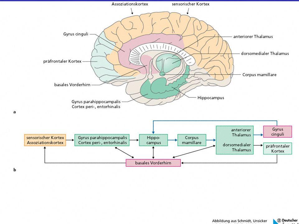 Das Gehirn Funktionieren Unsere Grauen Download Image collections ...