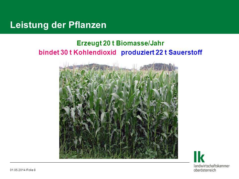 01.05.2014 /Folie 8 Leistung der Pflanzen Erzeugt 20 t Biomasse/Jahr bindet 30 t Kohlendioxid produziert 22 t Sauerstoff