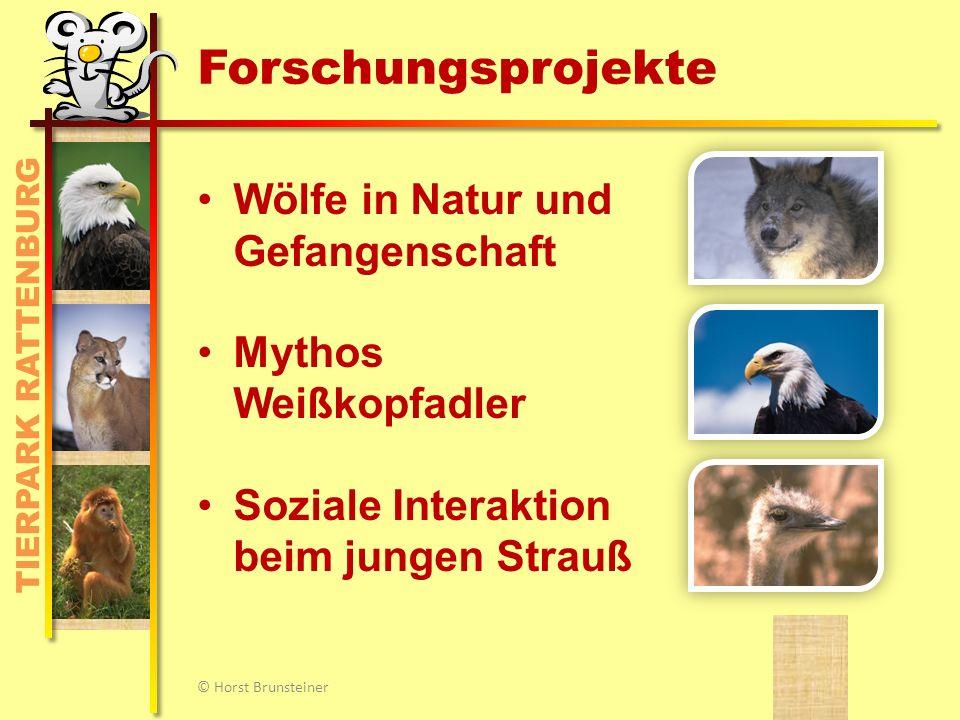 Schwerpunkt: Wölfe in Natur und Gehege © Horst Brunsteiner