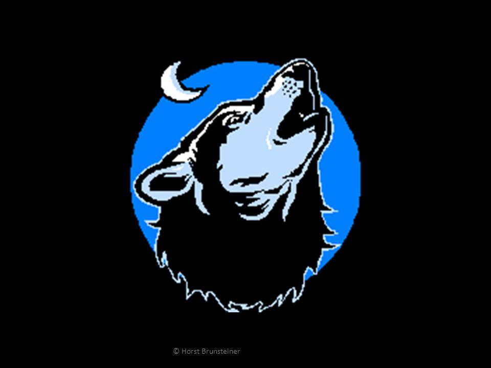 TIERPARK RATTENBURG Forschungsprojekte Wölfe in Natur und Gefangenschaft Mythos Weißkopfadler Soziale Interaktion beim jungen Strauß © Horst Brunsteiner