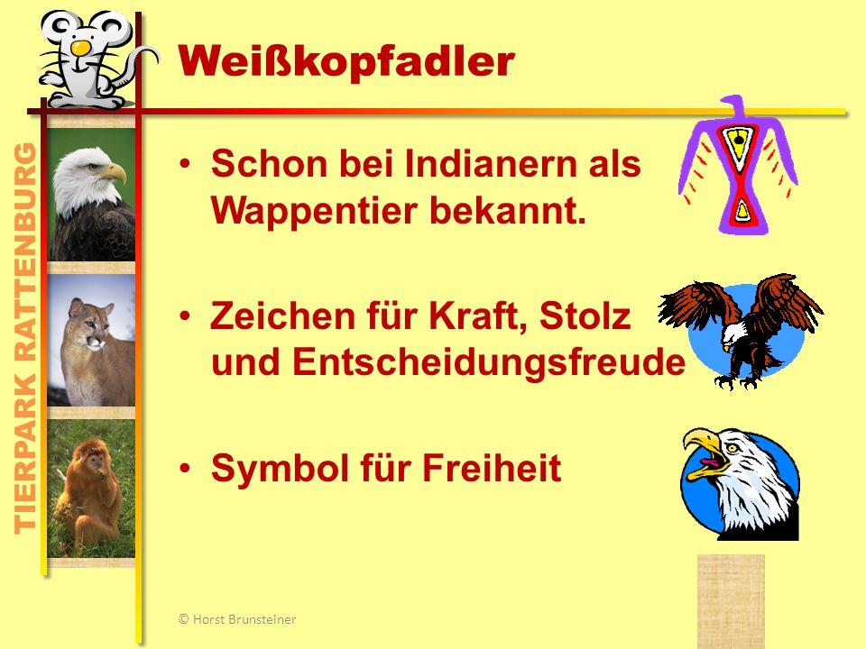 TIERPARK RATTENBURG Äthiopischer Wolf © Horst Brunsteiner