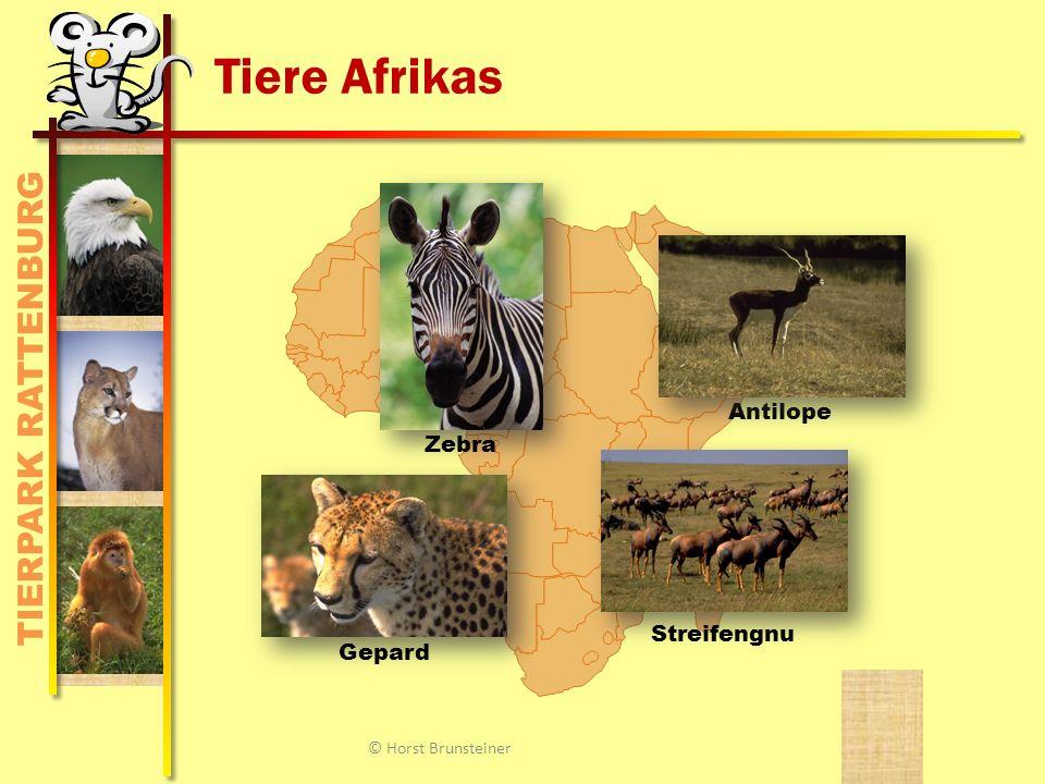 TIERPARK RATTENBURG Tiere Afrikas Antilope Zebra Gepard Streifengnu © Horst Brunsteiner
