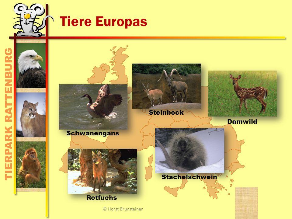 TIERPARK RATTENBURG Weißkopfadler Schon bei Indianern als Wappentier bekannt.