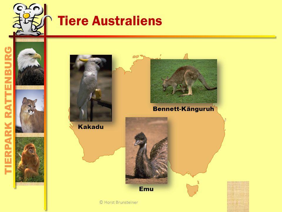 TIERPARK RATTENBURG Tiere Australiens KakaduEmu Bennett-Känguruh © Horst Brunsteiner