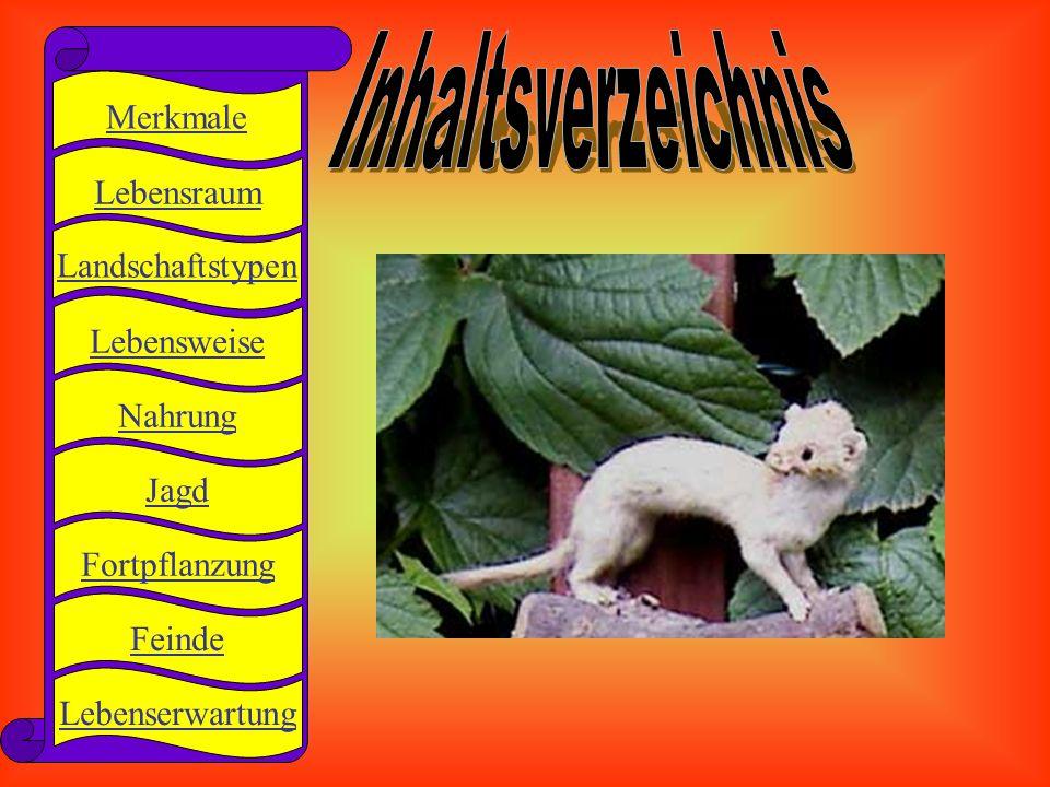 - langer, schlanker Körper - kurzer Schwanz - kurze Beine - Kopfumfang: 17 - 33 cm - Schwanzumfang: 4 - 12 cm - Gewicht: 40 - 360 g zurück