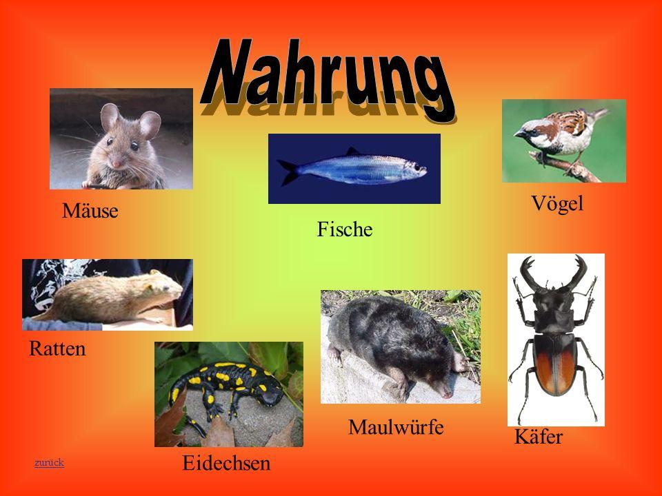 Maulwürfe Käfer Eidechsen Ratten Fische Vögel Mäuse