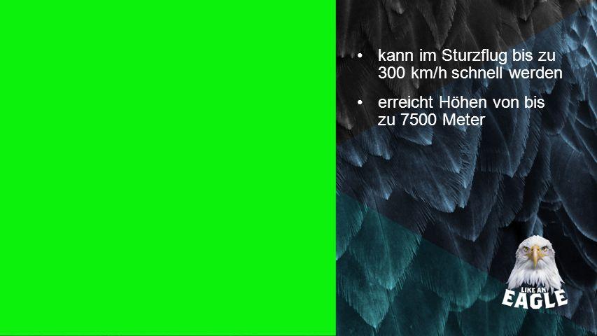 Seiteneinblender kann im Sturzflug bis zu 300 km/h schnell werden erreicht Höhen von bis zu 7500 Meter