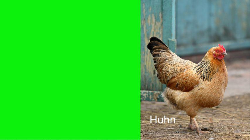 Seiteneinblender Huhn