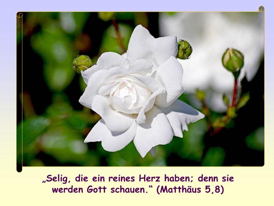 Selig, die ein reines Herz haben; denn sie werden Gott schauen. (Matthäus 5,8)