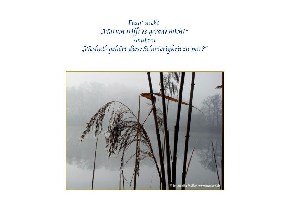 Weisheit ohne Liebe bringt uns keinen Schritt vorwärts.