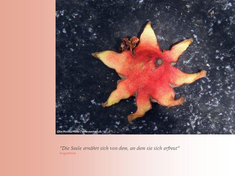 Die Seele ernährt sich von dem, an dem sie sich erfreut Augustinus ©by Monika Müller / www.moniart.ch