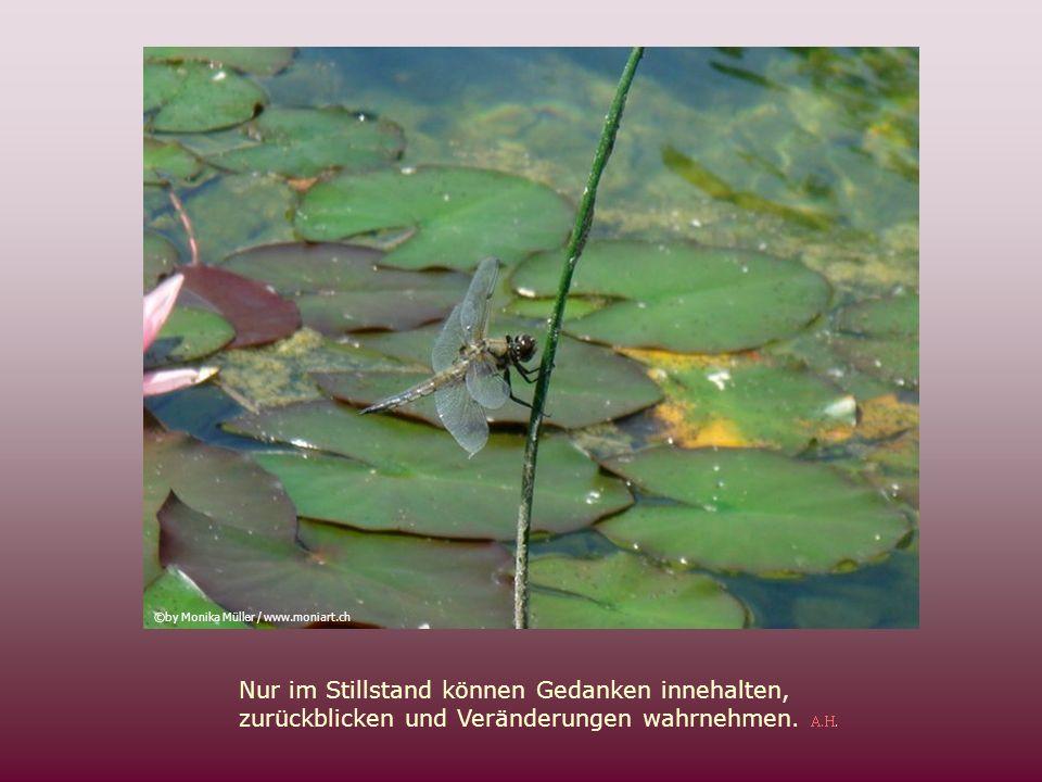 A.H. Glauben heisst, die Dinge mit dem Herzen zu erkennen. A.H. ©by Monika Müller / www.moniart.ch