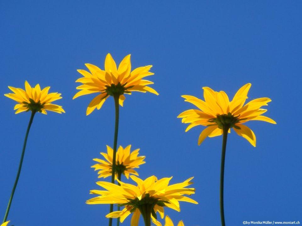 Ein erfülltes Leben ist keine Folge der Erfüllung aller Wünsche.