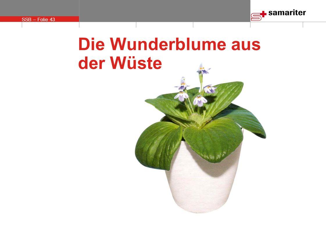 SSB – Folie 43 © Schweizerischer Samariterbund Die Wunderblume aus der Wüste