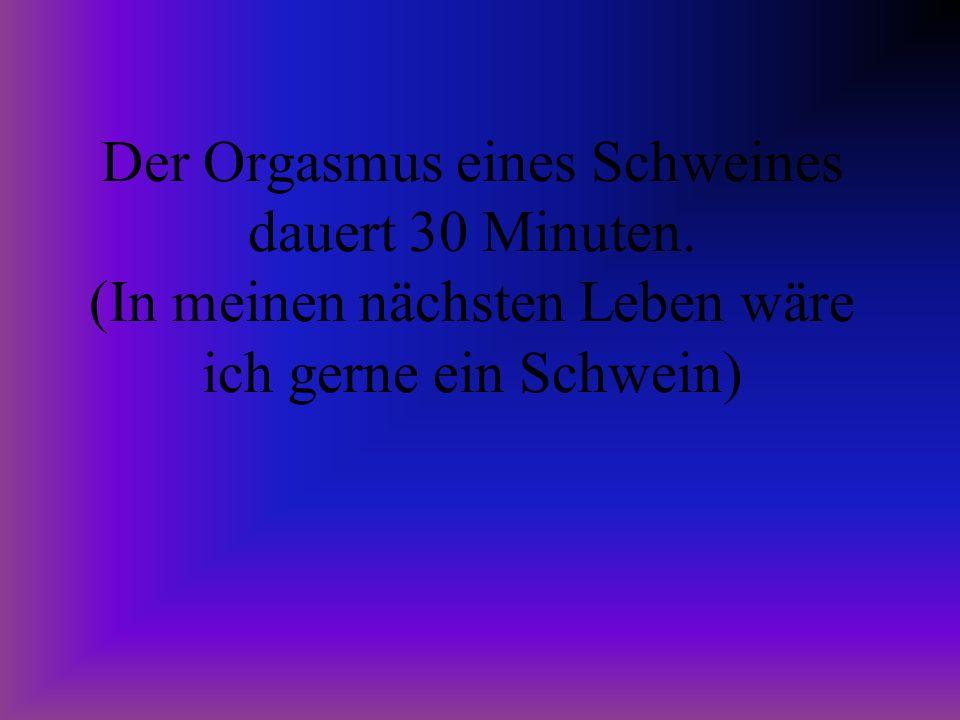 Der Orgasmus eines Schweines dauert 30 Minuten. (In meinen nächsten Leben wäre ich gerne ein Schwein)