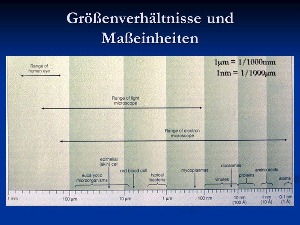 Größenverhältnisse und Maßeinheiten 1µm = 1/1000mm 1nm = 1/1000µm