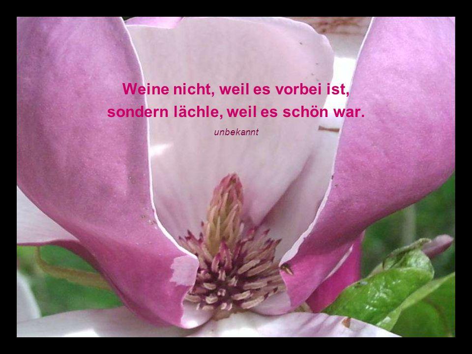 Das Schöne zieht einen Teil seines Zaubers aus der Vergänglichkeit. Hermann Hesse