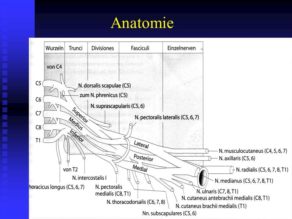 Normal: ventrale und dorsale Nervenwurzelfasern
