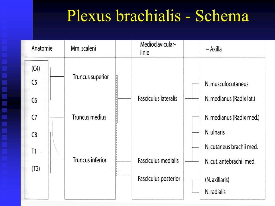Partieller Wurzelausriss der ventralen Faser