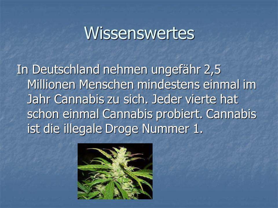 Wissenswertes In Deutschland nehmen ungefähr 2,5 Millionen Menschen mindestens einmal im Jahr Cannabis zu sich. Jeder vierte hat schon einmal Cannabis