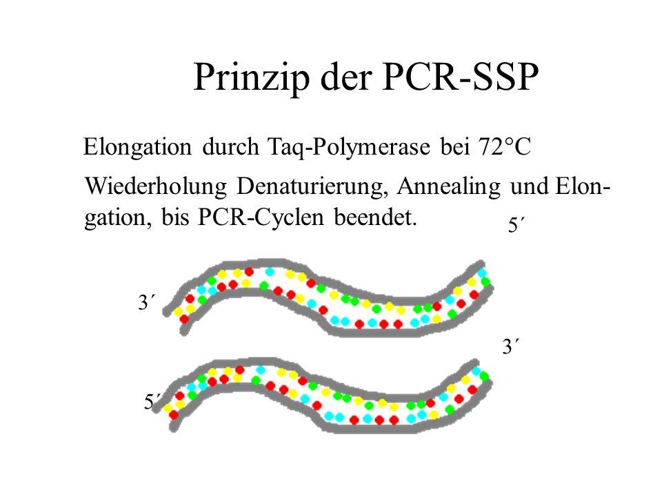 Prinzip der PCR-SSP 5´ 3´ 5´ Elongation durch Taq-Polymerase bei 72°C Wiederholung Denaturierung, Annealing und Elon- gation, bis PCR-Cyclen beendet.