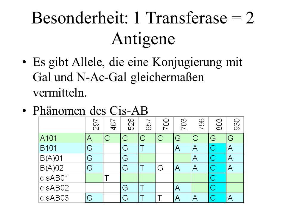 Besonderheit: 1 Transferase = 2 Antigene Es gibt Allele, die eine Konjugierung mit Gal und N-Ac-Gal gleichermaßen vermitteln. Phänomen des Cis-AB