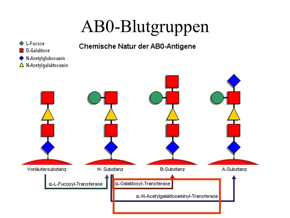 AB0-Blutgruppen