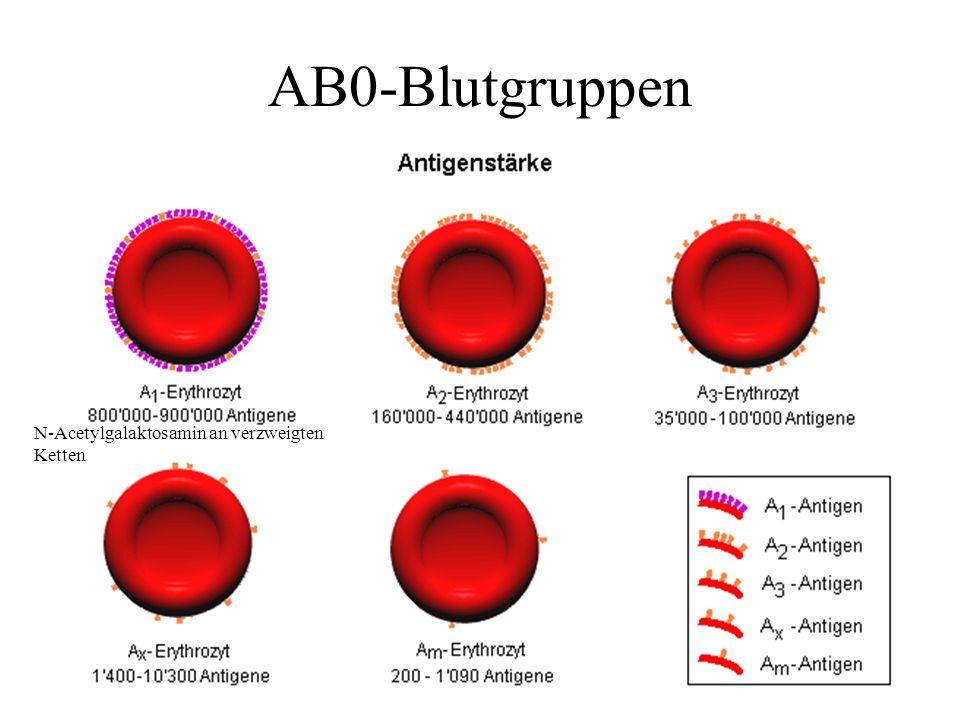 N-Acetylgalaktosamin an verzweigten Ketten