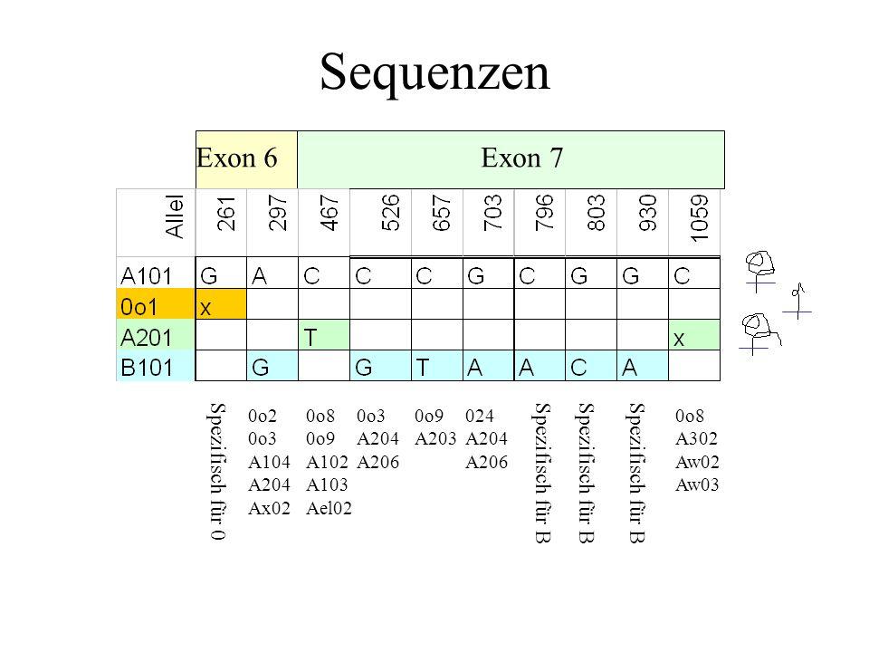 Sequenzen Exon 6 Exon 7 Spezifisch für 0Spezifisch für B 0o2 0o3 A104 A204 Ax02 0o8 0o9 A102 A103 Ael02 0o3 A204 A206 0o9 A203 024 A204 A206 Spezifisch für B 0o8 A302 Aw02 Aw03