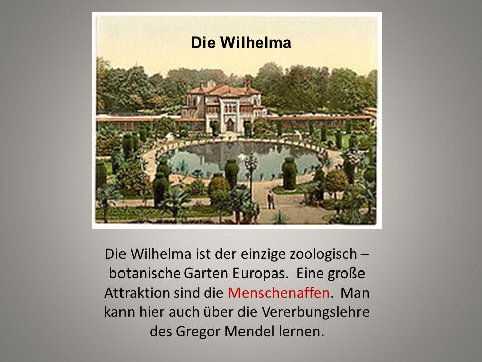Die Wilhelma Die Wilhelma ist der einzige zoologisch – botanische Garten Europas. Eine große Attraktion sind die Menschenaffen. Man kann hier auch übe