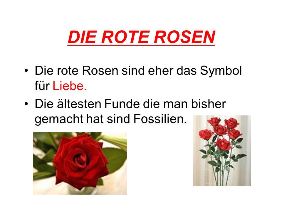 DIE ROTE ROSEN Die rote Rosen sind eher das Symbol für Liebe. Die ältesten Funde die man bisher gemacht hat sind Fossilien.