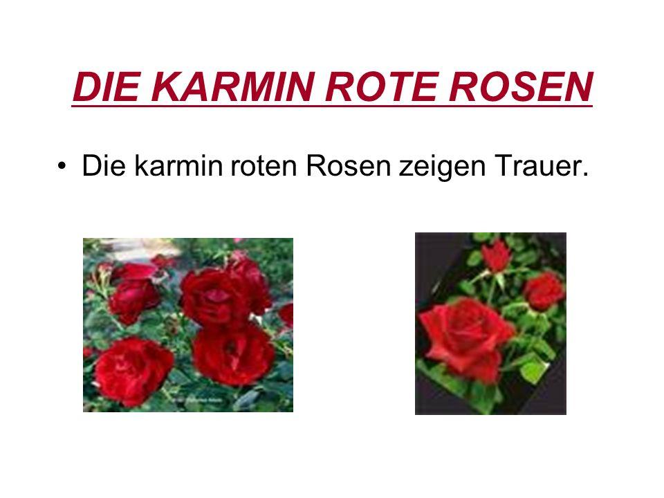 WEISE ROSEN Weise Rosen zeigen für Leidenschaft, Unschuld, Treue und Zustimmung.
