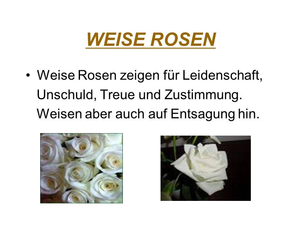 WEISE ROSEN Weise Rosen zeigen für Leidenschaft, Unschuld, Treue und Zustimmung. Weisen aber auch auf Entsagung hin.