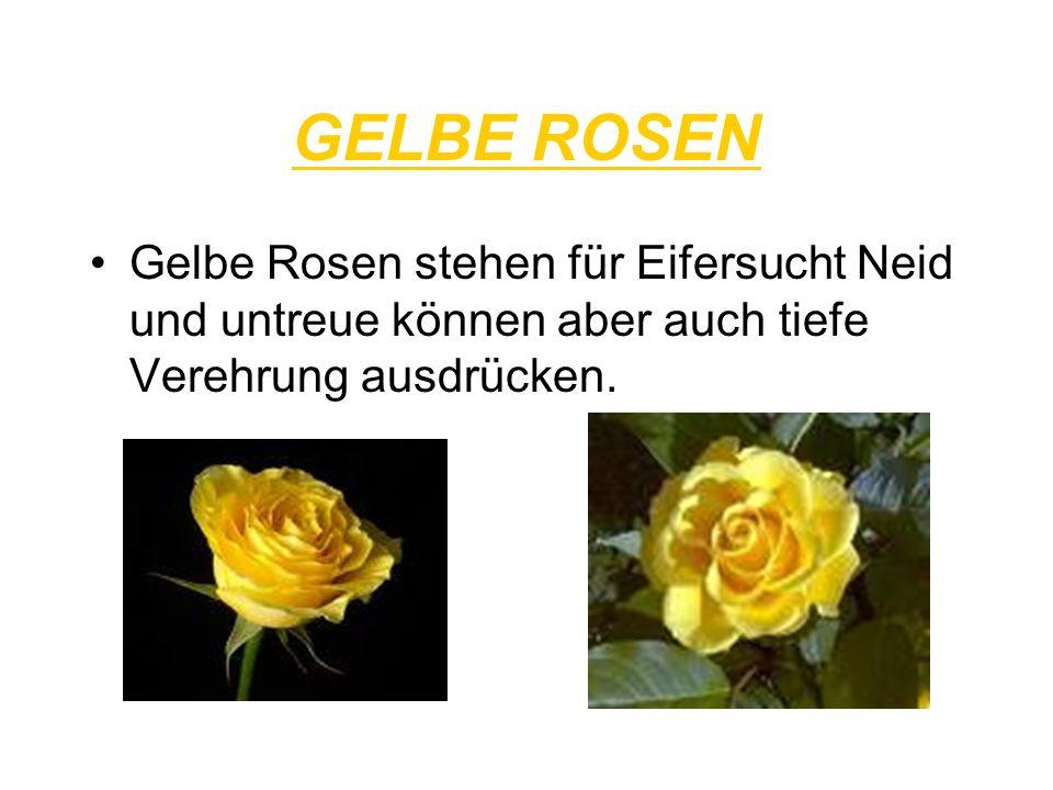 GELBE ROSEN Gelbe Rosen stehen für Eifersucht Neid und untreue können aber auch tiefe Verehrung ausdrücken.