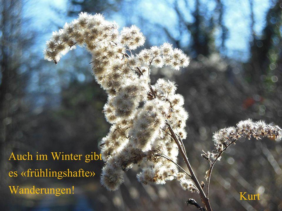 Kurt Auch im Winter gibt es «frühlingshafte» Wanderungen!