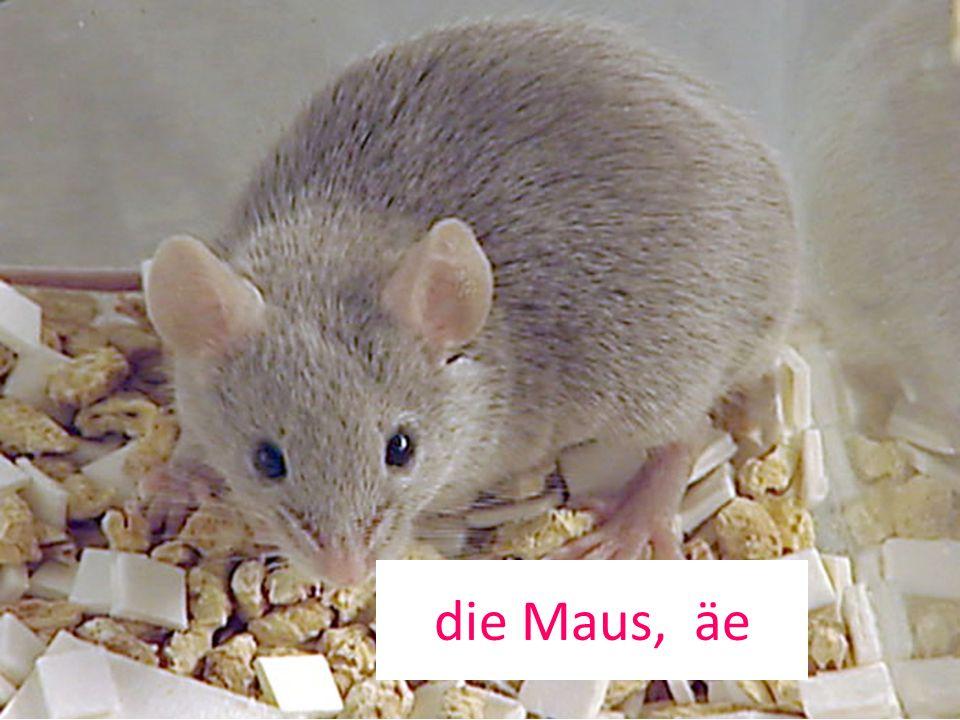 die Maus, äe