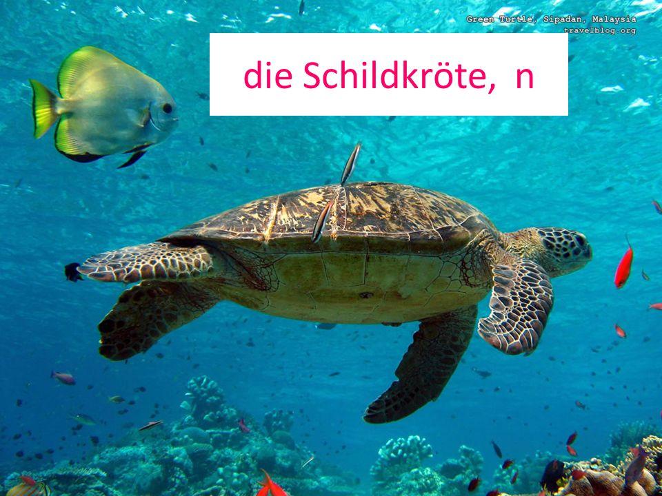die Schildkröte, n