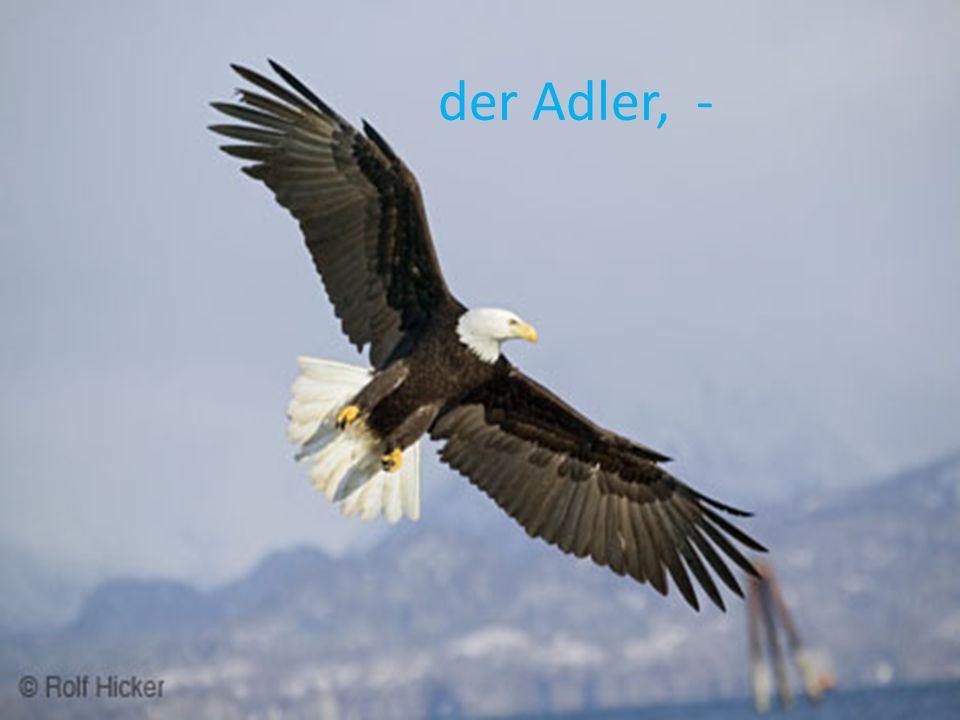 der Adler, -