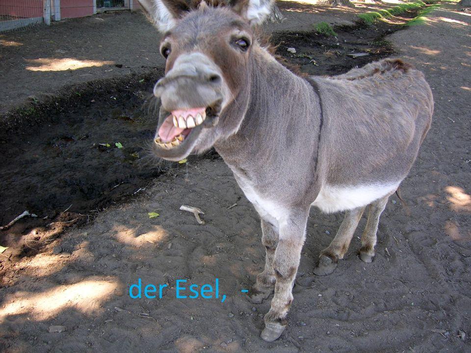der Esel, -
