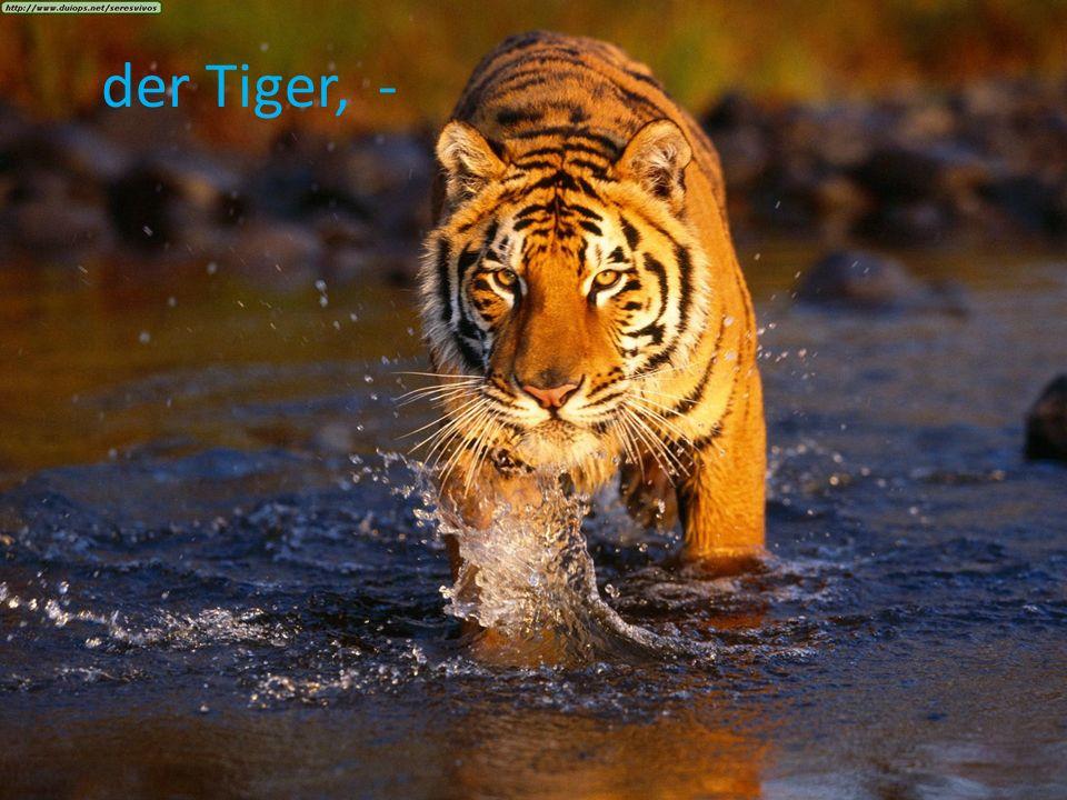 der Tiger, -