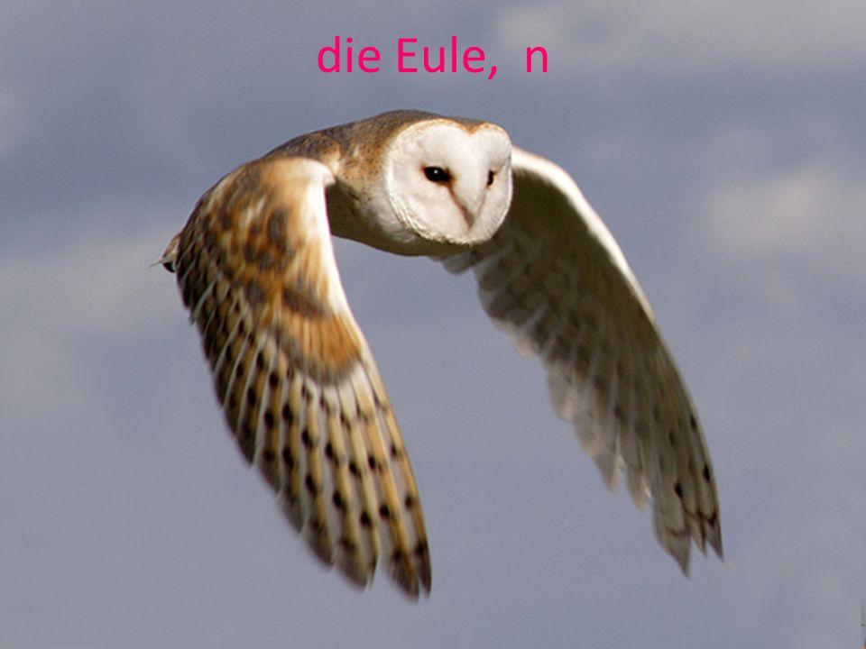 die Eule, n