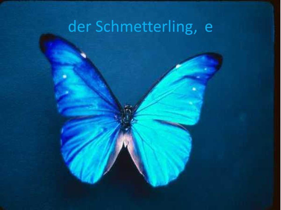 der Schmetterling, e