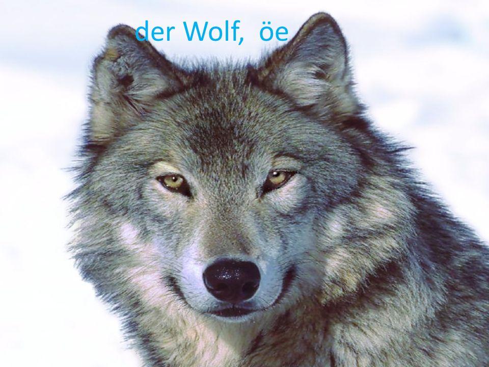 der Wolf, öe