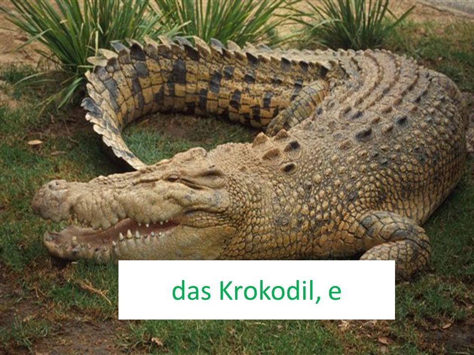 das Krokodil, e