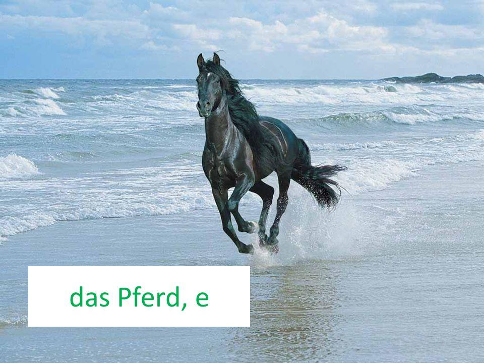 das Pferd, e